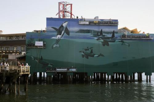 The Orcas of Puget Sound